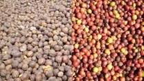 Tồn kho cà phê toàn cầu đạt mức cao 5 năm mặc dù sản lượng giảm
