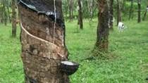 Thái Lan đề xuất tiếp tục giảm xuất khẩu cao su thêm 1 năm