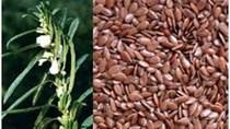 Giá hạt lanh có thể giảm do sản lượng tăng lên mức cao 7 năm