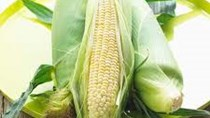 Giá ngô thấp 40 tháng, lúa mì giảm do triển vọng nguồn cung toàn cầu
