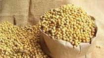 Thị trường NL TĂCN thế giới ngày 22/6: Gía đậu tương tăng