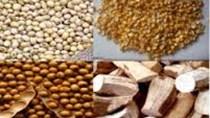 Kim ngạch nhập khẩu TĂCN và nguyên liệu của Việt Nam 5 tháng tăng 18,5%