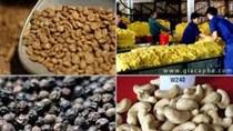 TT nông sản tuần đến 22/6: Giá gạo giảm nhẹ tại các tỉnh ĐBSCL