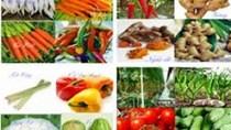 Xuất khẩu rau quả 5 tháng đầu năm tăng gần 15% kim ngạch