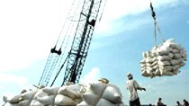 Xuất khẩu gạo 8 tháng vẫn trên đà sụt giảm