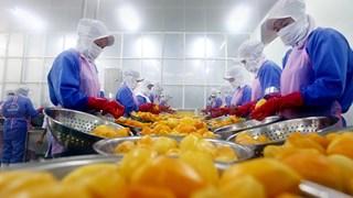 Một năm thu quả ngọt từ Hiệp định EVFTA