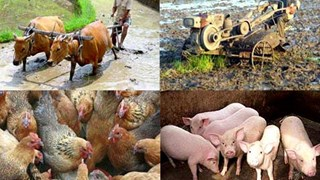 Sắp diễn ra Hội thảo về đầu tư vào nông nghiệp Quảng Ninh