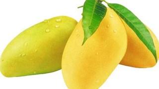 15-16/5:Mời gặp gỡ Người mua - Người bán xoài và hoa quả nhiệt đới tại Ấn Độ