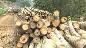 Việt Nam, EU hoàn tất đàm phán hiệp định chống khai thác gỗ trái phép