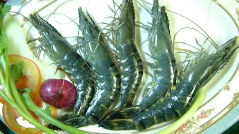 Hoa Kỳ từ chối nhập khẩu tôm do salmonella và kháng sinh cấm