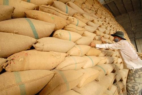 Xuất khẩu gạo Ấn Độ tăng dù Covid-19