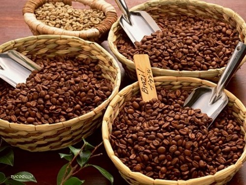 TT cà phê ngày 17/12: Giá cao nhất lên mức 33.000 đồng/kg