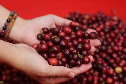 Thị trường cà phê toàn cầu đã có một năm đầy biến động bởi dịch COVID-19