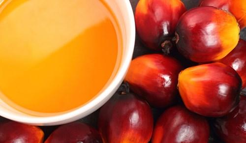 Giá dầu cọ vượt ngưỡng 1.000 USD/tấn ảnh hưởng đến giá sôcôla và mỹ phẩm