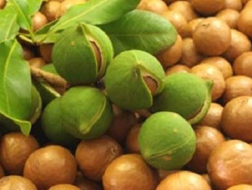 TT trái cây tuần qua: Mắc ca trái vụ được giá, dưa hấu ở mức cao kỷ lục