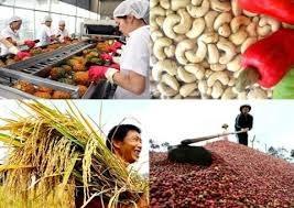 Kết thúc năm 2020 ngô, đường, đậu tương tăng giá bất chấp dịch Covid-19