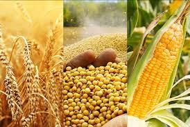Thị trường TĂCN thế giới 11/1/2021: Đậu nành tăng lên mức cao sau 6,5 năm