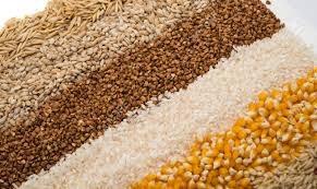 TT ngũ cốc thế giới ngày 23/02/2021: Giá lúa mì giảm do thời tiết lạnh ảnh hưởng vụ mùa