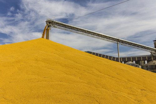Thu hoạch ngũ cốc của Ba Lan tăng nhờ năng suất cao hơn