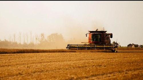 IGC nâng dự báo cho vụ lúa mì toàn cầu 2020/21