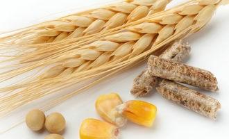 Brazil tạm ngừng áp thuế nhập khẩu ngũ cốc