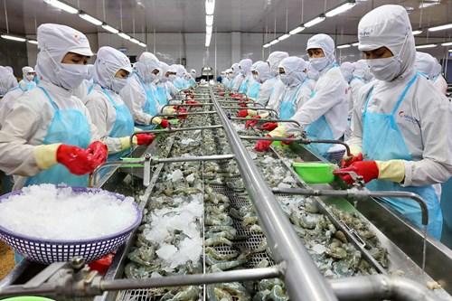 FAO ra báo cáo toàn cảnh thị trường tôm thế giới