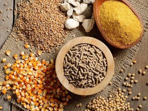 Giá ngũ cốc ngày 3/8: Đậu nành, ngô giảm khoảng 1% do lo ngại nhu cầu giảm - bơi