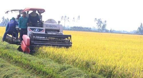 Khắc phục khó khăn, bảo đảm sản lượng lúa hàng năm