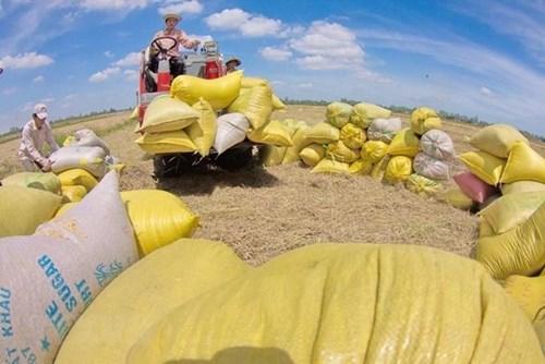Nâng cao chất lượng để gạo Việt Nam chiếm lĩnh các thị trường