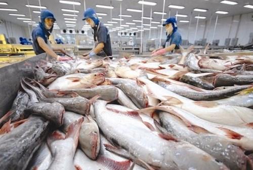 Campuchia hủy lệnh cấm nhập khẩu 4 loại cá da trơn