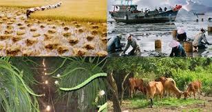 Quyết định 03/2021/QĐ-TTg về thực hiện chính sách hỗ trợ bảo hiểm nông nghiệp - mega 655