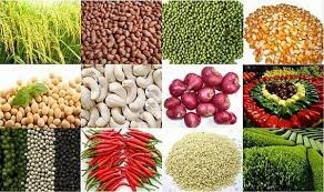 Xuất khẩu 5 mặt hàng nông sản bật tăng mạnh nhờ hỗ trợ của các FTA