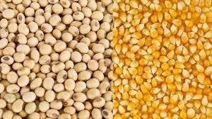 Thị trường TĂCN thế giới ngày 07/10/2019: Lúa mì, ngô và đậu tương đồng loạt tăng