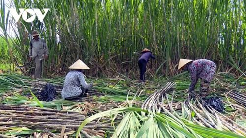 Ap thue duong Thai Lan