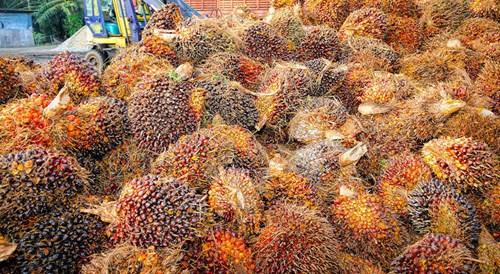 San luong dau co cua Malaysia