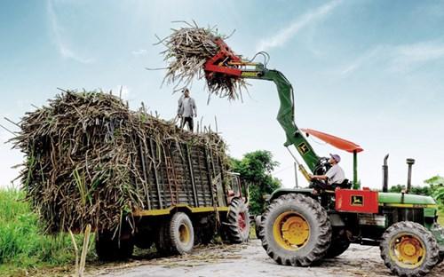 Nông dân thu hoạch mía ở Tây Ninh. Ảnh Công Điều