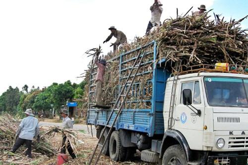 Thắng lợi bước đầu của mía đường Việt Nam trước sự tàn phá khủng khiếp của mía đường nhập khẩu giá rẻ - Ảnh 6.