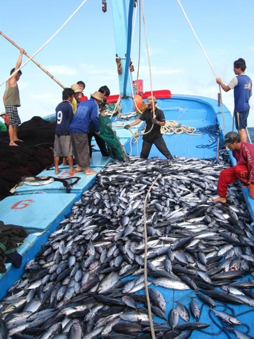 Thực hiện Đề án Tái cơ cấu ngành thủy sản, sản xuất thủy sản duy trì đà tăng trưởng khá nhanh, hiệu quả sản xuất ngày càng cao. Ảnh: Vũ Đình Thung.