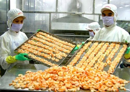 Hiệp định EVFTA có hiệu lực từ 1/8 đã mang lại những lợi thế không nhỏ cho tôm Việt Nam tại thị trường EU. Ảnh: Lê Hoàng Vũ.