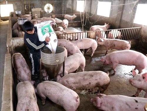Dự thảo chiến lược ngành chăn nuôigiai đoạn 2021-2030, tầm nhìn đến 2045