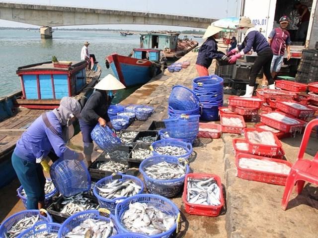 Tình hình tại Quảng Trị sau khi nguyên nhân cá chết được công bố