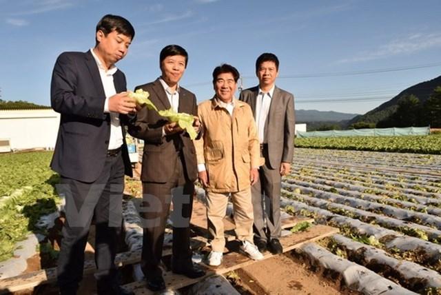 """Đưa mô hình """"làng nông nghiệp thần kỳ"""" của Nhật sang Việt Nam"""