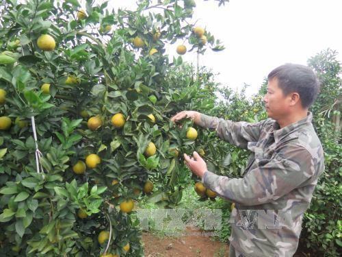 Sản vật Việt: Làm gì để có thương hiệu lớn?