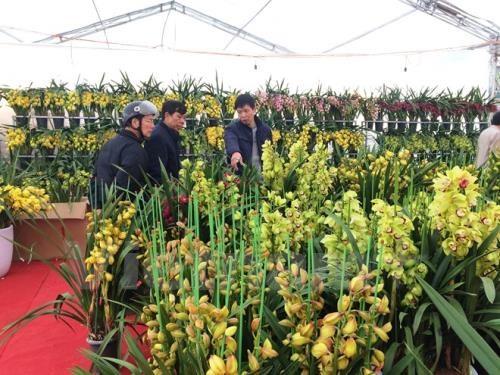 Bí quyết trồng lan thu hơn 200 triệu đồng/tháng