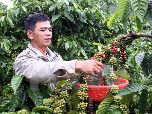 Brazil bất ngờ đình chỉ quyết định nhập khẩu càphê Việt Nam