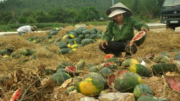 Tại sao nông sản liên tục rớt giá?