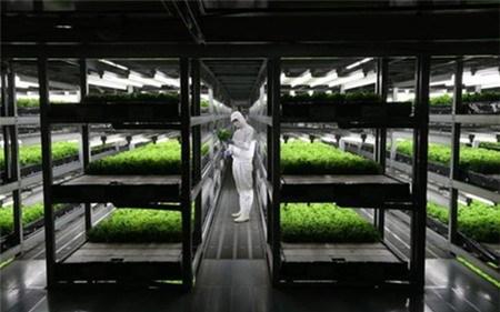 """""""Cơn sốt"""" nông nghiệp công nghệ cao tại châu Á"""