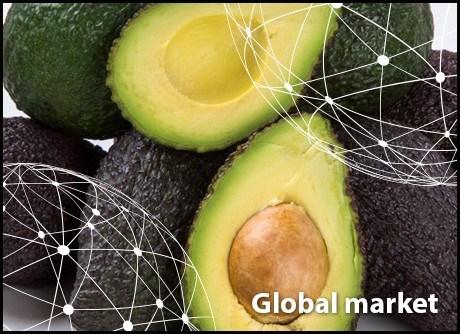 Toàn cảnh thị trường trái bơ thế giới