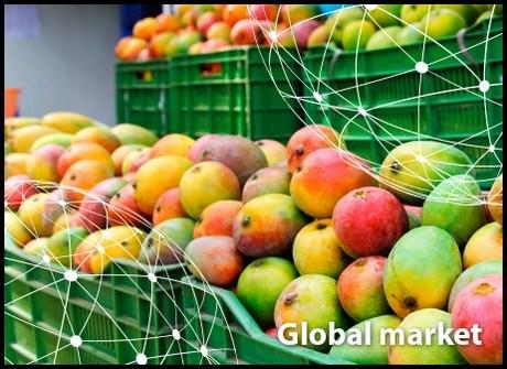 Toàn cảnh thị trường xoài thế giới