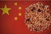 """Vì sao Trung Quốc đi """"thu gom"""" hạt giống khắp toàn cầu?"""